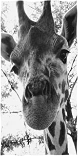 Best giraffe poop pictures Reviews