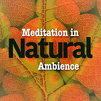 Meditation in Natural Ambience