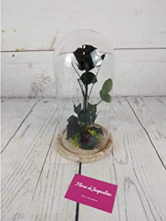 Rosa Negra Eterna La Bella y La Bestia - Flores de Jacqueline Valencia