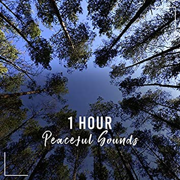 1 Hour Peaceful Soft Sounds to Clear your Mind