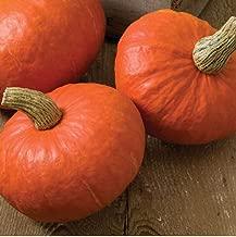 David's Garden Seeds Squash Winter Sunshine SL2355 (Orange) 25 Non-GMO, Hybrid Seeds