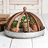 CTW Home Collection Metal Tray with Wood and Chicken Wire Cloche Home Essential, 12.5 inches Diameter x 9.5 inches Height, Brown/Gray
