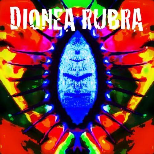 Dionea Rubra