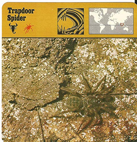 1975 Editions Rencontre, Animals Card, 15.347 Trapdoor Spider