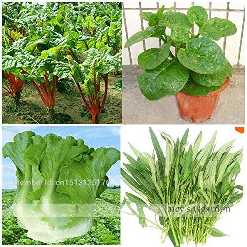 Jardin Décoration Bonsai 100 Laitue Graines Légumes Facile à cultiver Great Salad Choice BRICOLAGE SeedsAndPlants Jardin Pots Plantes
