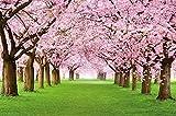 GREAT ART Mural De Pared ? Mural De Flor De Cerezo ?Flores Primavera Jardín Planta Bosque Parque Naturaleza para Florecer Árbol Avenida Foto Tapiz Y Decoración (210x140 Cm)