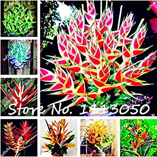 200Pcs Rare Color Heliconia Seeds DIY Home Garden Potted or Yard Flower Seeds Plant Seeds Easy to Grow for Home Garden