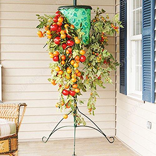 200 Pcs Graines de tomate Graines café tomate Bonsai NO-ogm graines végétales alimentaires santé pour jardin plante haute Germination Noir