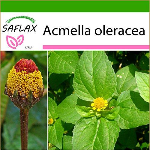 SAFLAX - Kräuter - Parakresse - 500 Samen - Mit keimfreiem Anzuchtsubstrat - Acmella oleracea