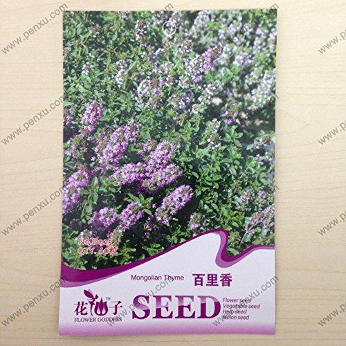 Originales paquet vanille graines de fleurs, graines de thym mongoles, la floraison à maturité 80 jours, 60 particules de graines / sac
