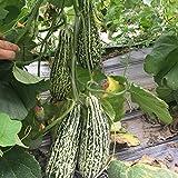 Semi di melone a buccia sottile Flower King Kong Melon Melon Seeds 300 Capsule