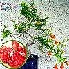 20pcs / sac grenade Mini Bonsai Graines SeedsAndPlants Plante Délicieux Fruit Graine grande et douce pour jardin Regarder Plantes Germination 95% #2