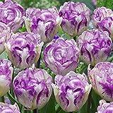 Pinkdose 5pcs rare couleur violet et blanc double bulbes de tulipes Bonsai Tulip Flower Home Garden plantes en pot Plantes vivaces bulbes: 13