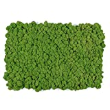 Living Moss Wall Tile
