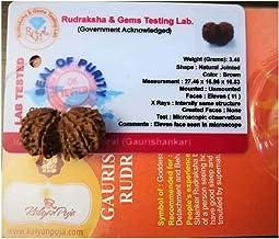 Gauri Shankar Rudraksha (Nepali - Certified)