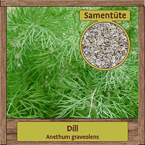 Samenliebe BIO Kräuter Samen Dill (Anethum graveolens) | BIO Dillsamen Kräutersamen | Saatgut für 1,5m²