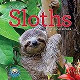 Original Sloths Wall Calendar 2022