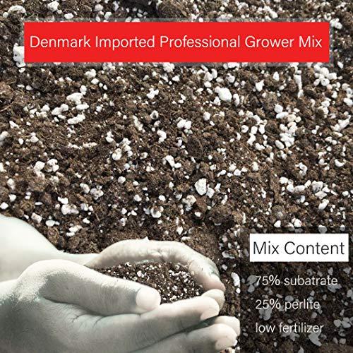 The Next Gardener Organic Soil for Succulents