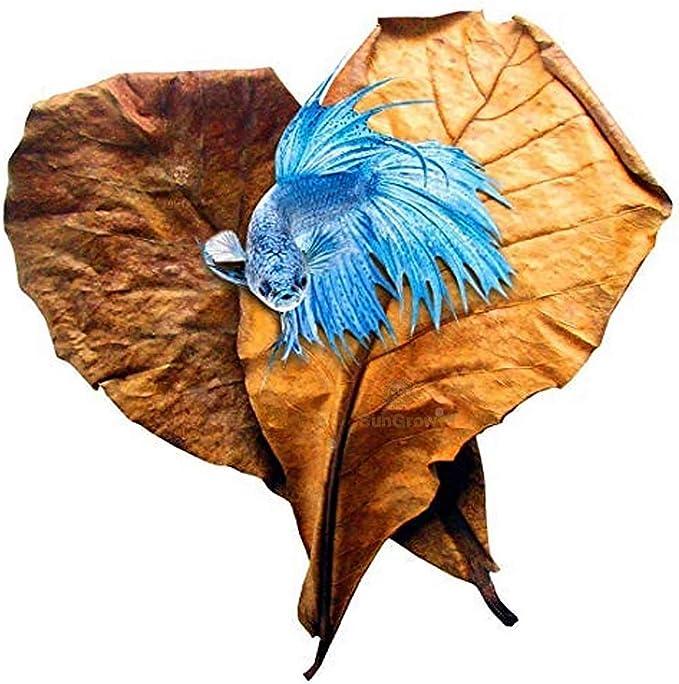449 opinioni per SunGrow Le foglie di Betta, Replicano L'habitat Naturale per Betta E Migliorano