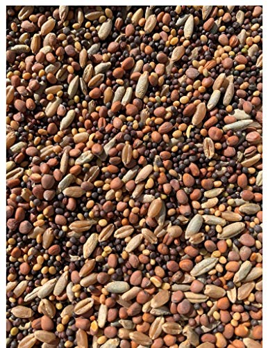 25lb Whitetail Deer Food Plot Seed | Turnip Radish Clover Wheat Rye Mix | Branson