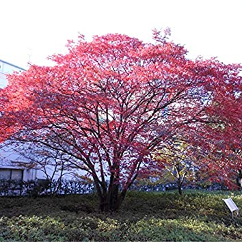 Furusato No Ki De Mori Wo Tsukurou (Let's Make Forest by Homeland Trees) (feat. GUMI)