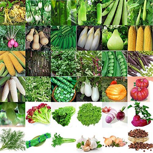 GETSO Graines Emballage: 29_ 2000pcs Choux Graines: 3-3000Pcs Légumes semences Jardin Potager Cour Décor Graines Lots en Gros