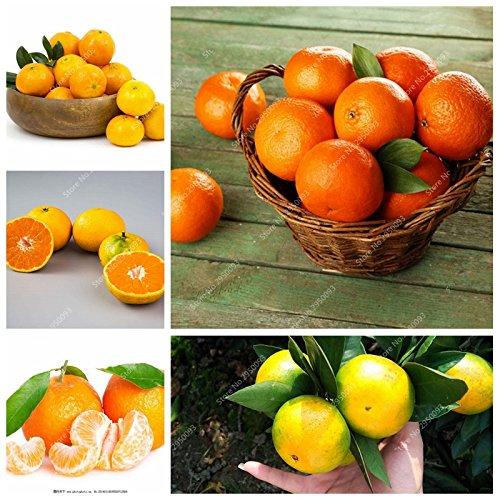 20pcs / sac d'escalade Graines d'Orange Mini-NO comestible OGM Bonsai Fruit Kumquat Mandarine en pot Plantons pour décor de jardin