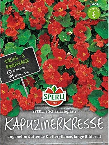 Sperli Blumensamen Kapuzinerkresse Scharlachglanz, grün