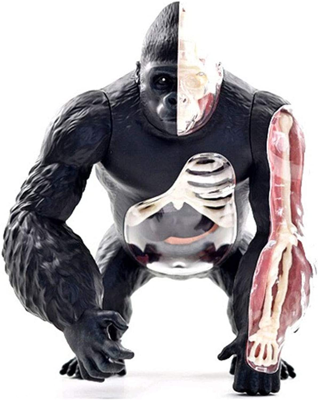 moda clasica GHTTHJ 4D Vision Gorilla Gorilla Gorilla Anatomy Model Extraíble órganos Y Partes del Cuerpo Kids Kit De Actividades De Ciencia Educativa  solo cómpralo