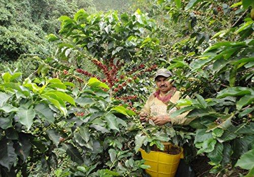 Micro Lot # 021-109 Unroasted Colombian Coffee Beans 3 - Pounds Single Origin Farm - Santa Helena