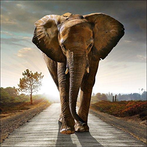 Pro-Art g1595l Wandbild Giclée 'Elephant' 100 x 100 cm