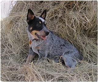 Best australian shepherd throw blanket Reviews
