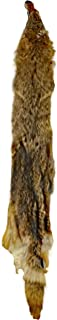 Glacier Wear First Quality Tanned North Eastern Coyote Real Fur Pelt Hide Skin (52-56 inches)