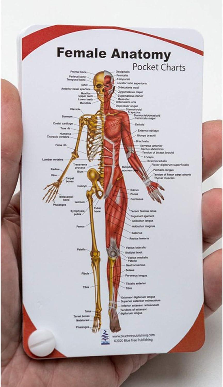 Max 71% OFF Blue Max 54% OFF Tree Publishing Female Anatomy Chart Pocket