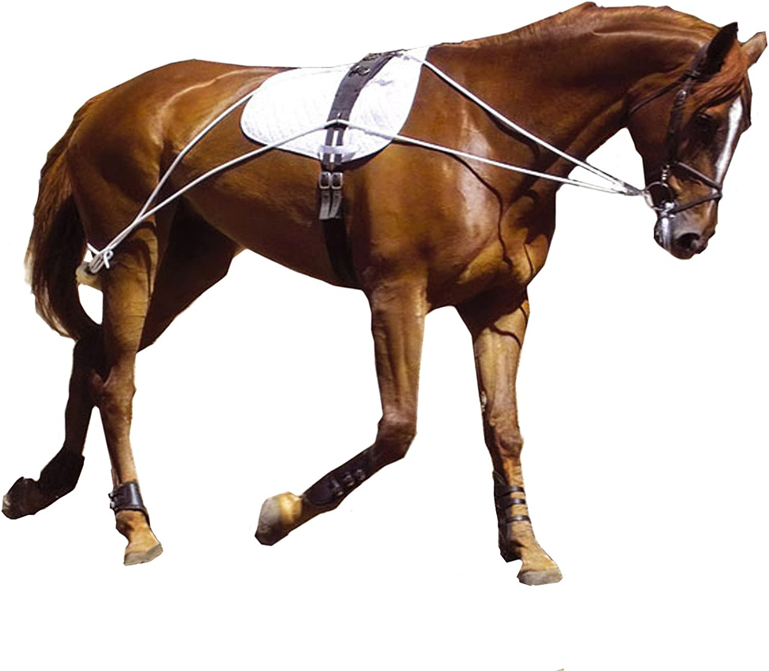 (01. Small Pony, White)  Hunters Saddlery Ultimate Horse Lunging Training Aid System Lunge Equipment  Pony, Cob Horse, Draught Size