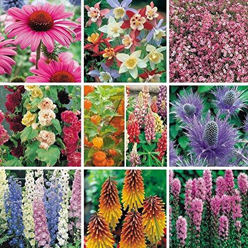 South Eastern Horticultural Pack X12 'Mixed Varieties' Garden Perennial Plug Plants Starter Pack