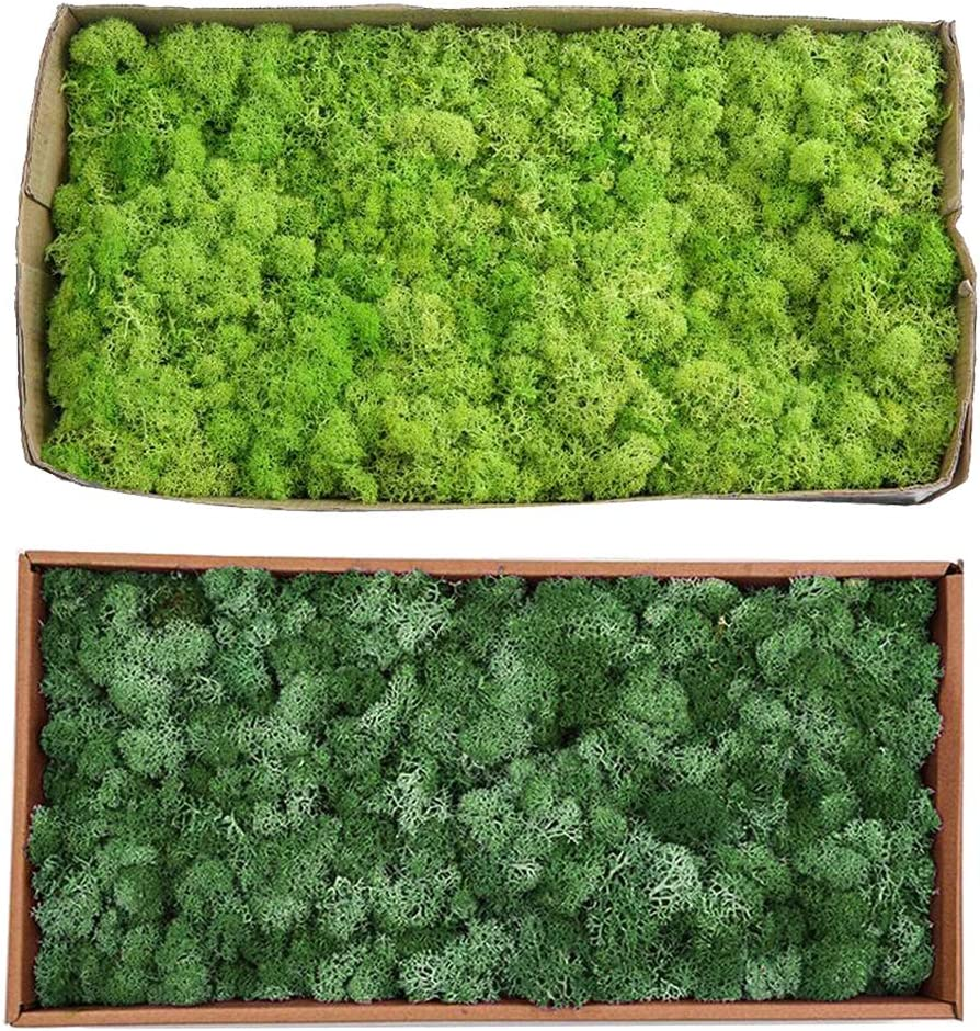Great interest N\C 2pcs Artificial Max 53% OFF Reindeer Moss P Wedding Craft for Dried