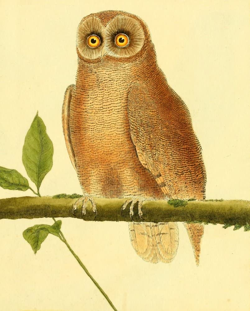 Posterazzi Pl Enlumin_ES d'Hist Ranking TOP7 NAT 1765 Print lowest price Owl 7 F by Poster