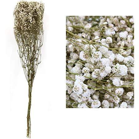 Details about  /Natural Material Natural Dried Bouquets Mini Real Flower Plant Stems Gypsophila