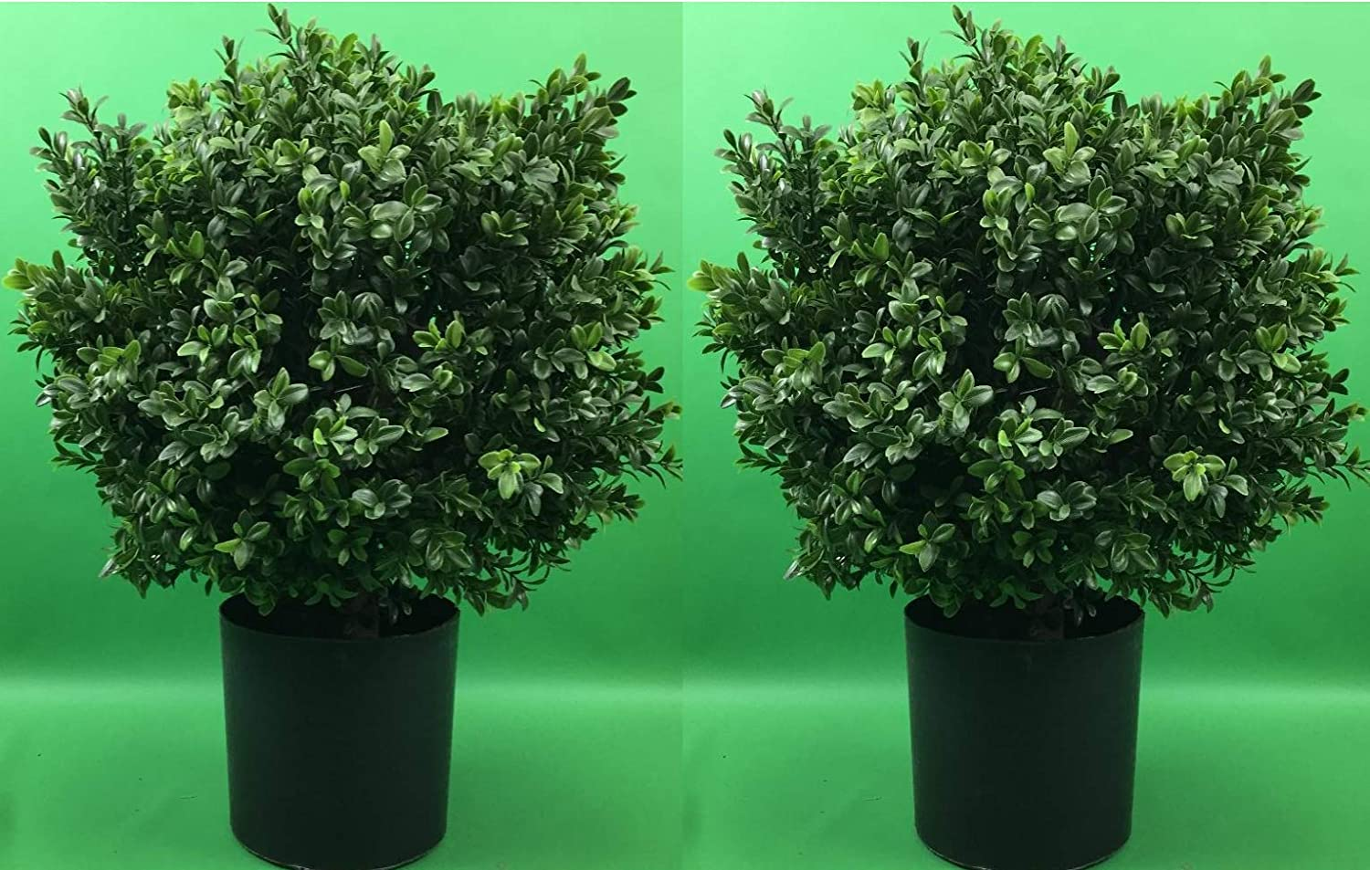 Two 24 inch Tall Translated Indoor Outdoor UV Rated Topi Artificial Boxwood Charlotte Mall