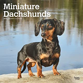 Miniature Dachshunds 2019 12 x 12 Inch Monthly Square Wall Calendar, Animals Small Dog Breeds (Multilingual Edition)