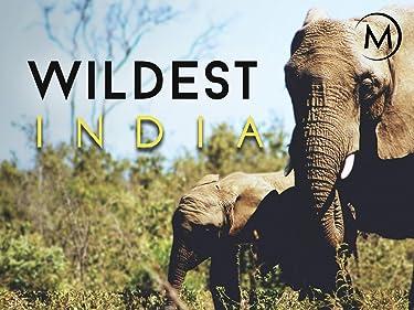 Wildest: India