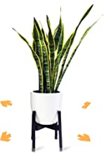 Adjustable Mid Century Modern Plant Stand for Pot Sizes 8