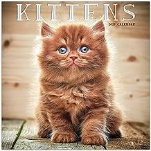 Best cute kitten calendar 2018 Reviews