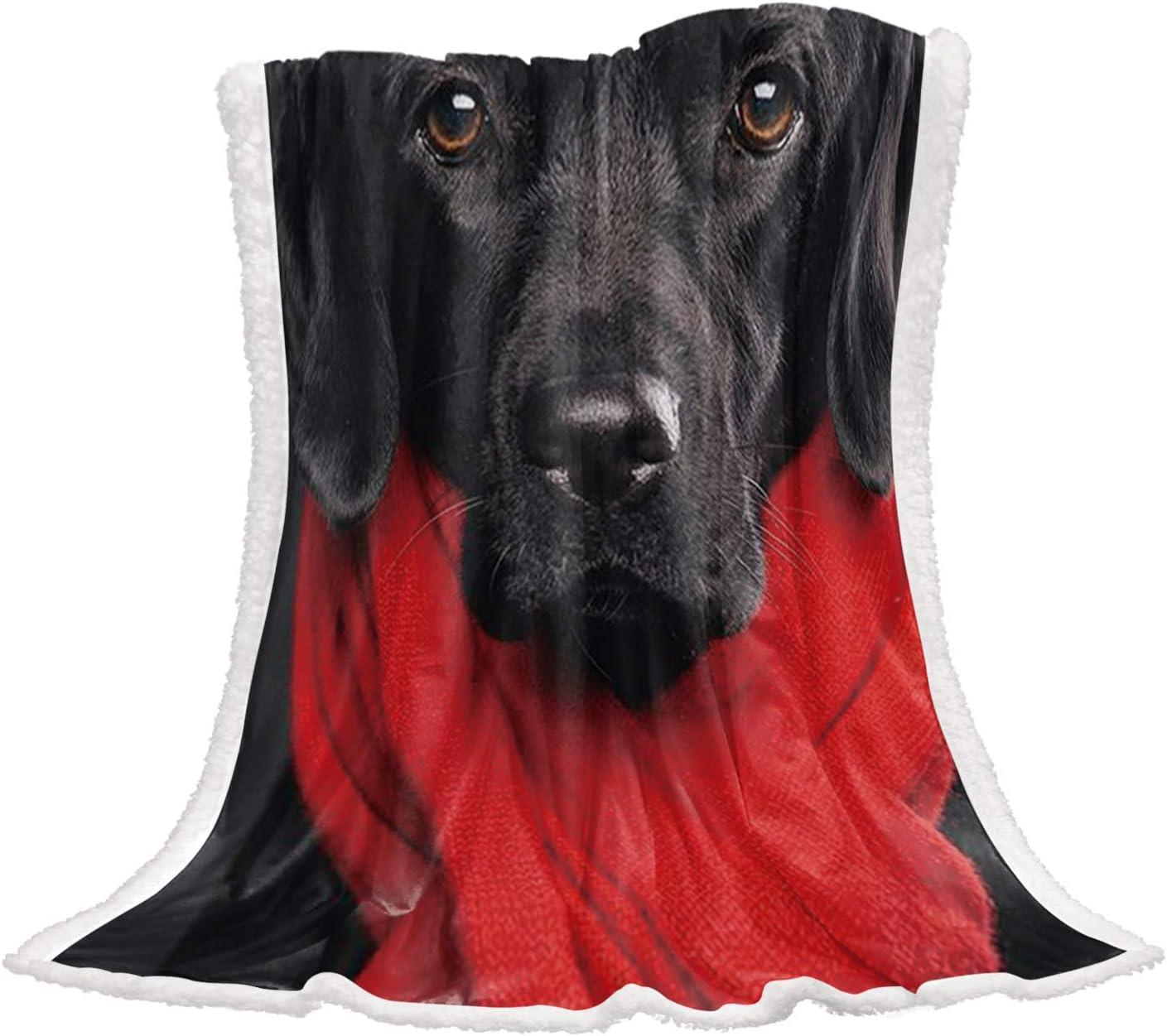 買取 Futuregrace ☆正規品新品未使用品 Lovely Labrador Black Dog Pattern Warm Throw Fleece