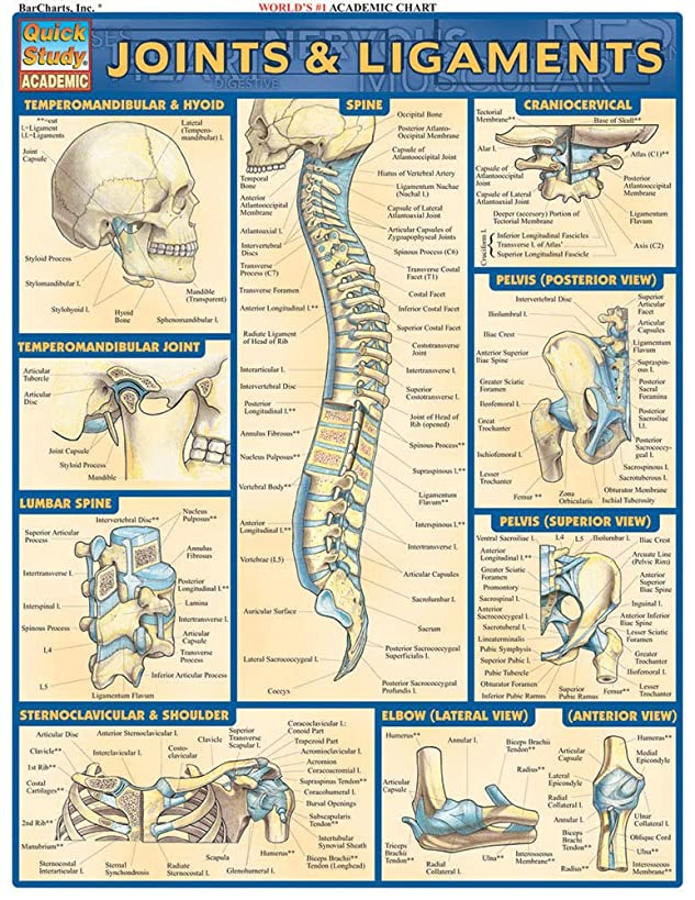 Joints & Ligaments (Quick Study Academic)