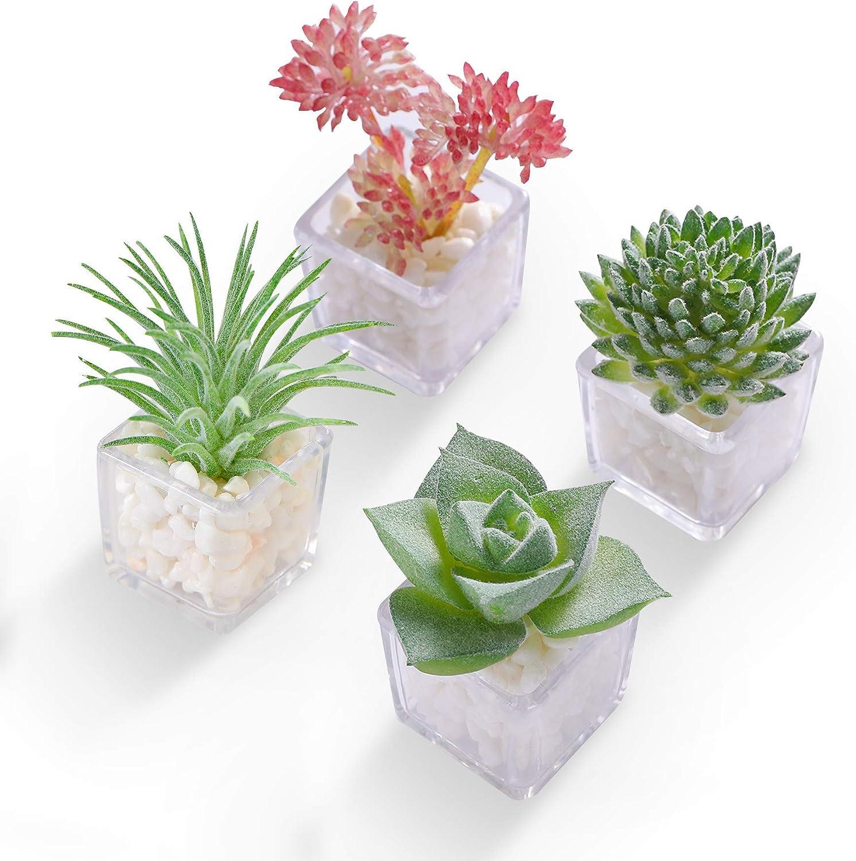 HEY FOLY Cactus Succulent Brand new Refrigerator 3D Magnet Cute Mini Sacramento Mall Plant