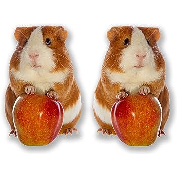 2 x 10cm Cute Tri-Colour Guinea Pig Stickers Laptop Tablet Car Kids Gift #6593