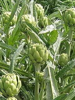 Heirloom Non GMO ARTICHOKE GREEN GLOBE