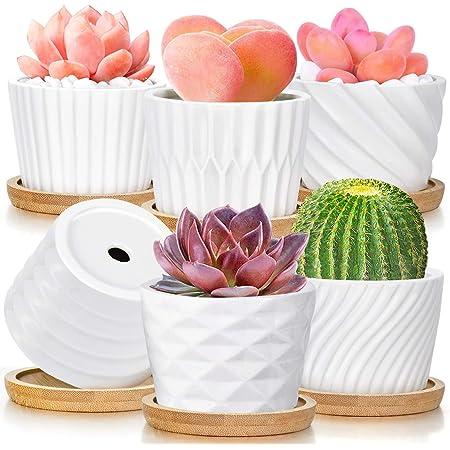 Succulent Pots, White Ceramic Pots for Plants Set of 6 Succulent Planters with Drainage Tray Bamboo Small Plant Pots 3 Inch Planter Pots Cactus Mini Flowers Pots with Saucer Garden Pots (White)